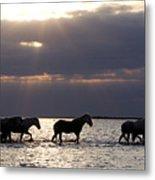 Sunrise Horses Metal Print