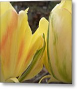 Sunrise Tulips Metal Print