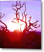 Sunset Through Silhouetted Tree In Desert 2 Metal Print