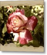 Surprise Rose Metal Print