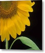 Sussex County Gem Metal Print