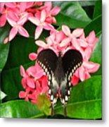 Swallow-wing Butterfly Metal Print
