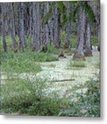Swamp Garden At Magnolia Plantation And Gardens Metal Print