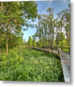 Swamp Garden Magnolia Plantation Metal Print