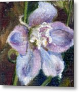 Sweet Bloom Aceo Metal Print