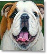Sweet Little English Bulldog Metal Print