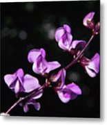 Sweet Pea Delight Metal Print