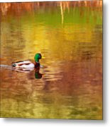 Swimming In Reflections Metal Print
