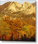 Sycamore And Oak Trees At Sunset Metal Print by Raymond Gehman