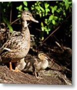 Taking Care Of Mom Metal Print