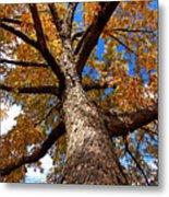 Tall Fall Tree Metal Print