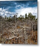 Tate's Hell State Forest Metal Print