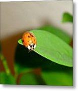 Tattered Ladybug Metal Print