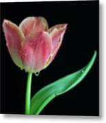 Teardrop Tulip Metal Print by Tracy Hall
