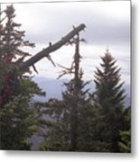 Tennessee Look Out Metal Print
