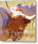 Texas Longhorns Metal Print