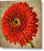 Textured Red Daisy Metal Print