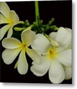 Thai Flowers Metal Print