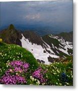 The Alps Wildflowers Metal Print
