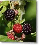 the Berries Metal Print