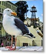 The Bird Of Alcatraz Metal Print