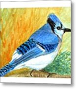 The Blue Jay Metal Print