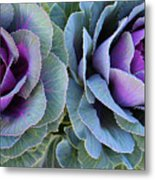 The Cabbage Patch Metal Print