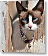 The Cat A Purrfect Carnivore Metal Print by Christine Till