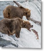 The Catch - Brown Bear Vs. Salmon Metal Print
