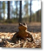 The Common Toad 3 Metal Print