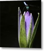 The Dragonfly And The Water Lily  Metal Print