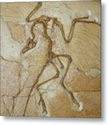 The Earliest Bird, Archaeopteryx Metal Print by Jason Edwards