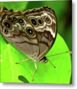 The Eyes Are Watching At You Metal Print