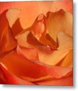 The Final Rose Of Summer Metal Print