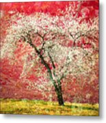 The First Blossoms Metal Print