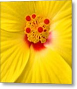 The Flowers Eyes-debbie-may Metal Print
