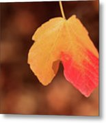 The Golden Leaf Of Fall Metal Print by Tracy Hall