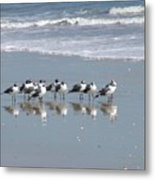 The Gull Gang Metal Print