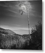 The Loner Metal Print