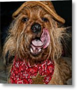 The Long Tongue Of The Law Metal Print
