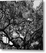 The Monastery Tree Metal Print