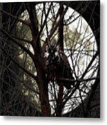 The Night Owl And Harvest Moon Metal Print by Wingsdomain Art and Photography