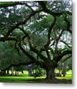 The Old Oak Metal Print by Perry Webster