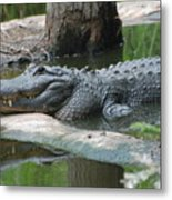 The Other Florida Gator Metal Print