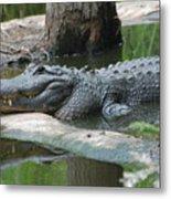The Other Florida Gator Metal Print