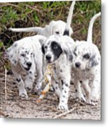 The Puppy's Prize Metal Print
