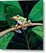 The Red Eyed Tree Frog Metal Print