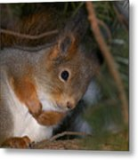 The Red Squirrel 4 Metal Print
