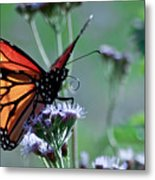 The Reigning Monarch Metal Print