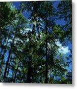 The Skyline Of Susan Creek Indian Mounds Metal Print